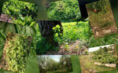 Guild - společenstvo stromu. Permadesign   Design přírodních zahrad Plants, Design, Plant, Planets
