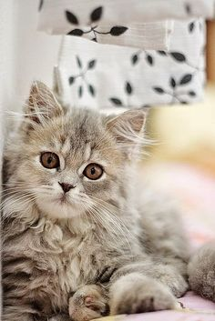 Stunning nature: Cats Pictures