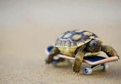 Oh no big deal just a little turtle riding a little skateboard ;) !