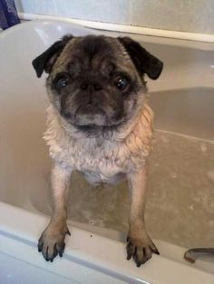 Have a bath they said. It'll be fun they said. They LIED!