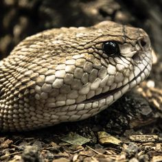 Reptile portrait  #iguana #portrait #nature #photography #animal #green #camiloyepesph #nikon #nikontop #nikonphotography #nikon_official #instapic #nikond610 #daily #trip #dailythreep #daily3p #closeup #texture