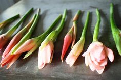It's a signature flavour in our cooking – it's hard to imagine iconic Malaysian dishes such as nonya laksa, asam pedas and nasi ulam without this distinctive ingredient. Gerbera Flower, Protea Flower, Asian Recipes, Healthy Recipes, Ginger Flower, Malay Food, Sour Soup, Thai Cooking, Malaysian Food
