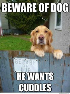 AWWW i would jump the fence just to hug the dog <3