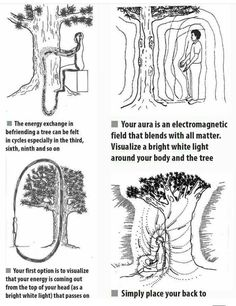 Taoist Masters observed that trees are tremendously powerful plants. Not only can they absorb carbon dioxide and transform it into oxygen, but they can also absorb negate forces and transform them into good energy. Wiccan Spells, Magick, Witchcraft, Les Chakras, Mudras, Spirit Science, Psychic Development, Book Of Shadows, Knowledge
