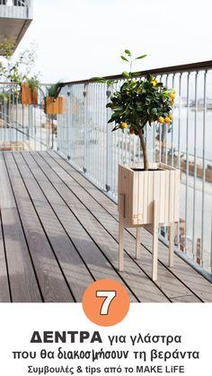 7 trees suitable for flowerpots Flower Pots, Flowers, Small Garden Design, Garden Bridge, Trees To Plant, Flower Arrangements, Terrace, Home Goods, Sweet Home