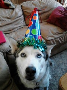 Today is my birthday, so I bought Aspen a hat for the celebration!