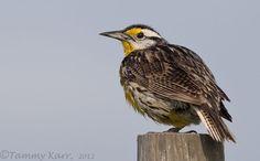 www.iheartfloridabirds.blogspot.com