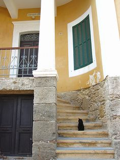 Cat in old town Rhodes.