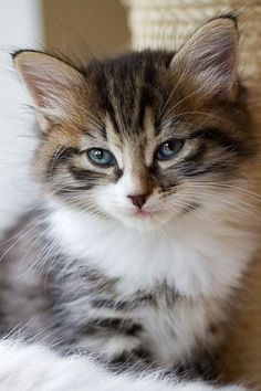 \A kitten brings a home to life.\ --Author Unknown