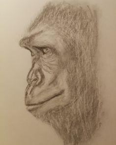 #drawing #animaldrawing #gorilla