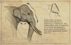 Tembo - How to draw elephants packet I created for the crew. || CHARACTER DESIGN…