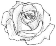 Beginning Shading of Rose