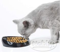 Savic Whisker Feeding Bowl for Persian and British shorthaired cats Dog Cat, Dogs, British, Accessories, Products, World, Gatos, Persian People, Doggies