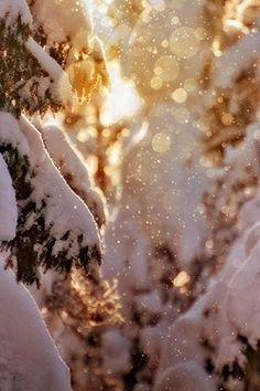 My favorite thing is walking out in nature and seeing the sun hit the snow. Suddenly you are surrounded by jewels more dizzying than any diamond ring.