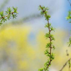 Веточка дерева :) #природа #природароссии