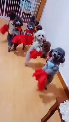 Funny Videos Clean, Funny Minion Videos, Funny Videos For Kids, Funny Animal Videos, Cute Baby Dogs, Cute Dogs And Puppies, Cute Babies, Cute Little Animals, Cute Funny Animals