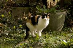 """Natural Cat Repellants for your garden 