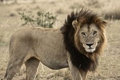 8 Telling Signs That You Should Go On Safari - Love Adventure