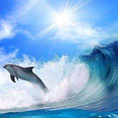 Dolphin in waves