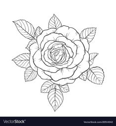 beautiful black and white bouquet rose and leaves. Rose Illustration, Botanical Line Drawing, Floral Drawing, Rose Sketch, Tattoo Project, Tattoo Stencils, Dog Tattoos, Rose Bouquet, Fabric Painting