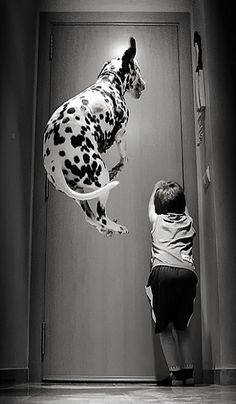 Brilliant Picture of a Dalmatian Jumping - Come and join us over at http://www.pindoggy.com