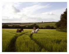 #grass #horses #fields This would be so relaxing.  I haven't been on a horse in years