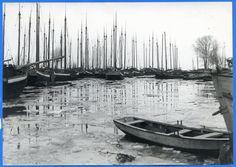 Tolkemit, Fischerboote im Hafen, Mastenwald