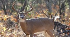 New USGS Study Says What We (Pretty Much) Knew About CWD in Whitetails - Wide Open Spaces
