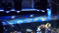 reef aquarium led light orphek dif 100 and dif 30 photo