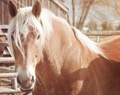 Fine art equine photography by ApplesAndOats