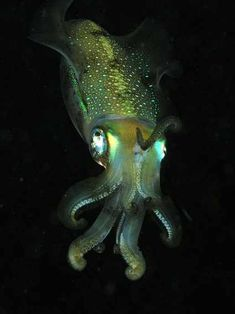 Bioluminescence is one of nature's most amazing phenomena! Take a cyber scuba dive and check out these amazing glow in the dark creatures. Frilled Shark, Vampire Squid, Deep Sea Creatures, Beautiful Bugs, Animals Of The World, Ocean Life, Pictures To Draw, Marine Life, Under The Sea