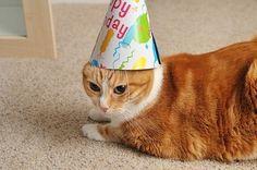 gato de aniversário