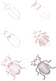 Learn how to draw animals & insects. One day I will be very glad I pinned this.: