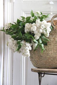 I need to grow lilac on my mini farm . my grandmother had a purple lilac bush on her farm. Cut Flowers, Fresh Flowers, White Flowers, Beautiful Flowers, House Beautiful, Deco Floral, Arte Floral, White Gardens, My Flower