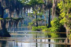 Photo: Wakulla Springs