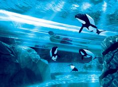 Dolphin Plunge in SeaWorld's Aquatica in Orlando, Florida, includes side-by-side tubes that zoom through the pool of a pod of dolphins