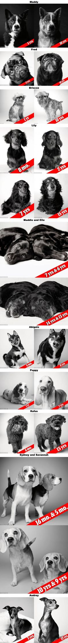 """""""Dog Years"""" - Portraits Of Aging Dogs That Will Melt Your Heart (By Photographer Amanda Jones)"""