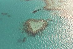 A beautiful natural shaped heart in the Great Barrier Reef.