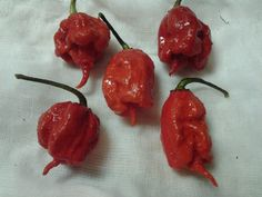 Čerstvé Carolina Reaper Peppers
