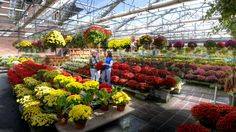Brightly colored mums, pansies, shrubs and trees bring beauty to a fall landscape. Garden Center Displays, Garden Centre, Flower Nursery, Plant Nursery, Fall Landscape, Landscaping Supplies, Garden Shop, Plant Species, Flower Farm