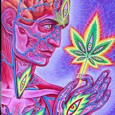 Cannabis Sutra, by Alex Grey. / Anatomical <3 http://psytraveller.net/alex-grey/