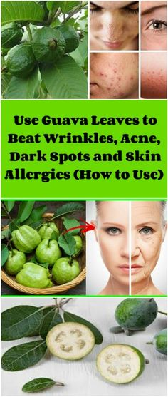 Use Guava Leaves to Beat Wrinkles, Acne, Dark Spots and Skin Allergies (How to Use)   Skin disorders vary greatly in symptoms and severity. Some of the most common ones are: wrinkles, acne, blemishes, hypersensitivities or dark spots on the face.
