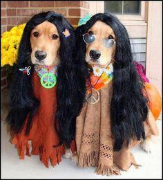 Golden Retriever Halloween Hippie Postcard very cute zazzle King Charles Spaniel, Cavalier King Charles, Pet Costumes, Halloween Costumes, Costume Ideas, Cher John, Funny Animals, Cute Animals, Funny Dogs