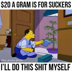 Eye On Springfield is a retrospective of Simpsons hilarity spanning from seasons 1 to when it was. 420 Memes, Weed Memes, Weed Humor, Funny Weed Pictures, Reaction Pictures, Weed Pics, Ganja, Goat Cartoon, Cartoon Pics