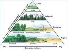 biomes | Science Class: Summary#6 World Biomes
