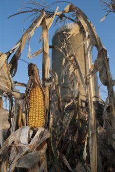 The Hidden Hormone Danger In Our Global Food Supply