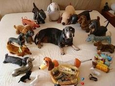 What happens when you own a Dachshund!! The collection begins!