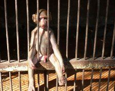 monkey letting it hang out in jail Yolo, Hanging Out, I Laughed, Monkey, Funny Pictures, Let It Be, Photo Diary, Fanny Pics, Jumpsuit