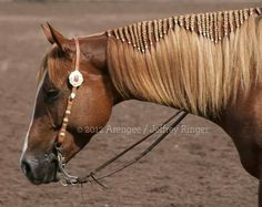 braided mane - This horse looks like my mare Cheyenne.- braided mane – This horse looks like my mare Cheyenne. Maybe one of these days … braided mane – This horse looks like my mare Cheyenne. Maybe one of these days I will do this to her mane. Horse Mane Braids, Horse Hair Braiding, All The Pretty Horses, Beautiful Horses, Animals Beautiful, Beautiful Braids, Pretty Braids, Horse Grooming, Horse Tips