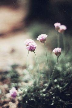 I love these wild flowers! Wild Flowers, Beautiful Flowers, Bouquet Flowers, Summer Flowers, Simple Flowers, Beautiful Things, All Nature, Flower Quotes, Parcs